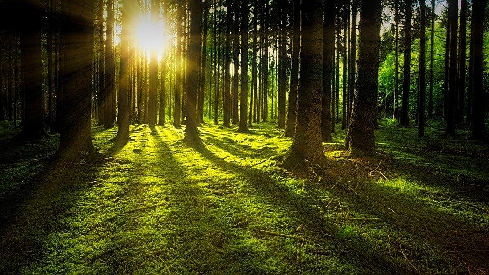 IN AUMENTO LA SUPERFICIE DELLE FORESTE EUROPEE