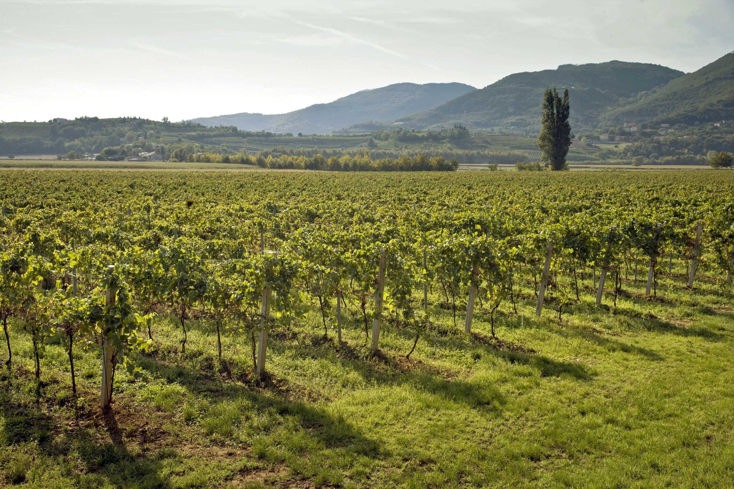 L'Europa rassicura il settore. Il vino non sarà penalizzato.