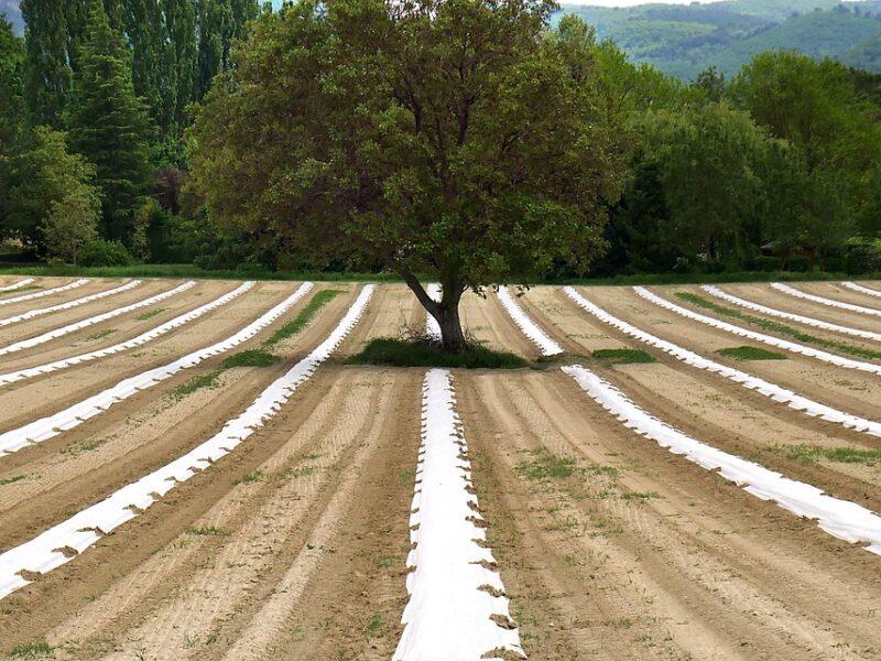 TRANSIZIONE ECOLOGICA, SERVE L'AGROECOLOGIA