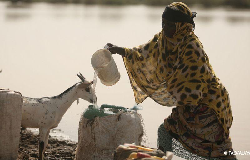FAO, 2030, SCONFIGGERE LA FAME. IL RUOLO DEI SISTEMI ALIMENTARI