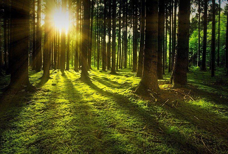 BOSCHI: ITALIA 2^ IN UE. 21 MARZO 2021, GIORNATA INTERNAZIONALE ONU DELLE FORESTE. 50.000 ALBERI ENTRO IL 2050
