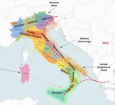 """IL PEDIGREE DEL GERMOPLASMA VITICOLO NELL""""ATLANTE DELLE PARENTELE DEI VITIGNI ITALIANI"""""""