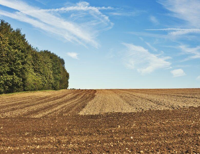 PRODUZIONE AGRICOLA 2020, DIMINUISCE SIA IN VOLUME (-3,2%) CHE IN VALORE AGGIUNTO (-6%)