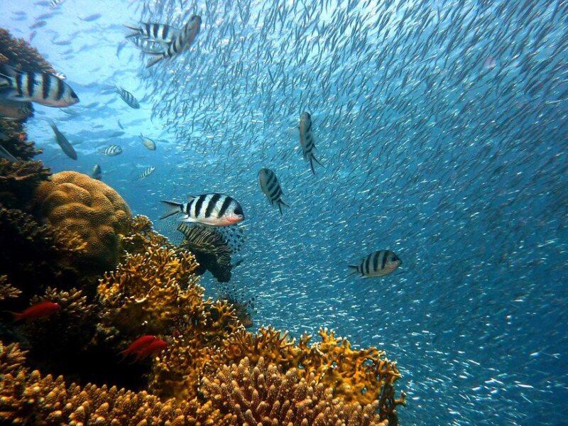 "GIORNATA DEGLI OCEANI, ""LIFE & LIVELIHOODS"". A GENOVA ""SLOW FISH 2021"""