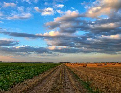 G20 dei Ministri dell'Agricoltura: i sistemi agroalimentari sono fondamentali